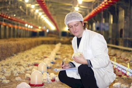 Veterinarian working on chicken farm© branex - Fotolia.com
